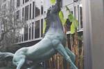cavallo-rai