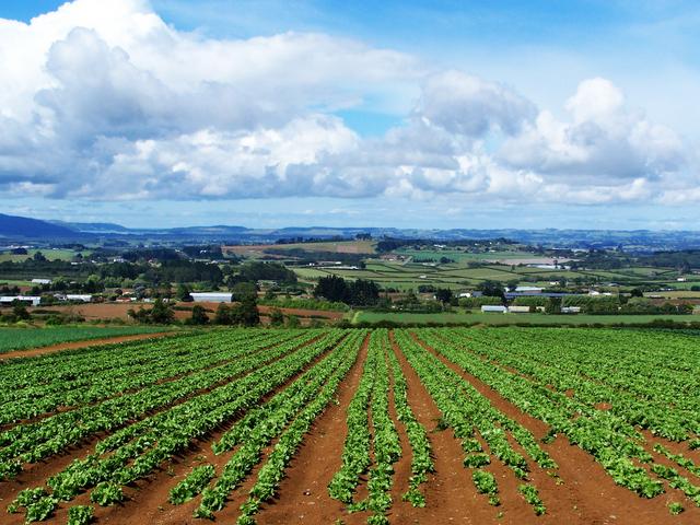 La Pac e la filiera corta fanno bene al sindacato agricolo, ma non all'agricoltura