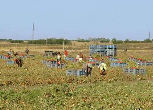 Agricoltura e sfruttamento, meglio evitare i luoghi comuni