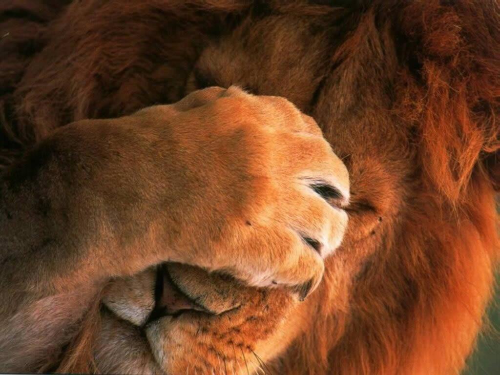 Il dibattito politico in Italia: hic sunt leones?