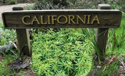 Verso il referendum californiano sulla droga: le ragioni del sì